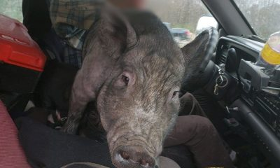 chisago-county-varken-auto-politie