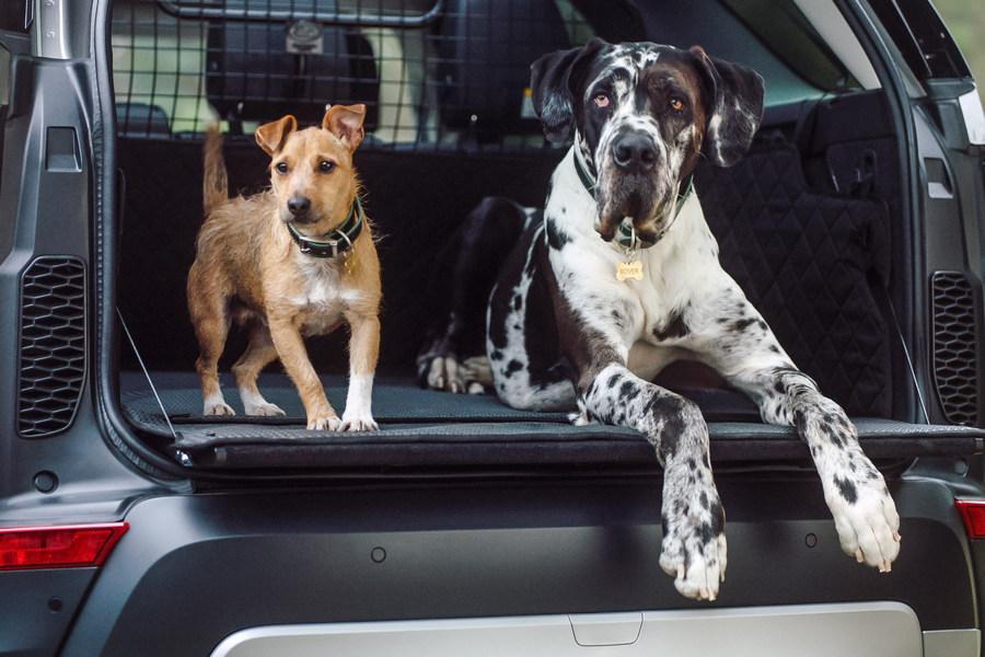 honden-land-rover-openklep