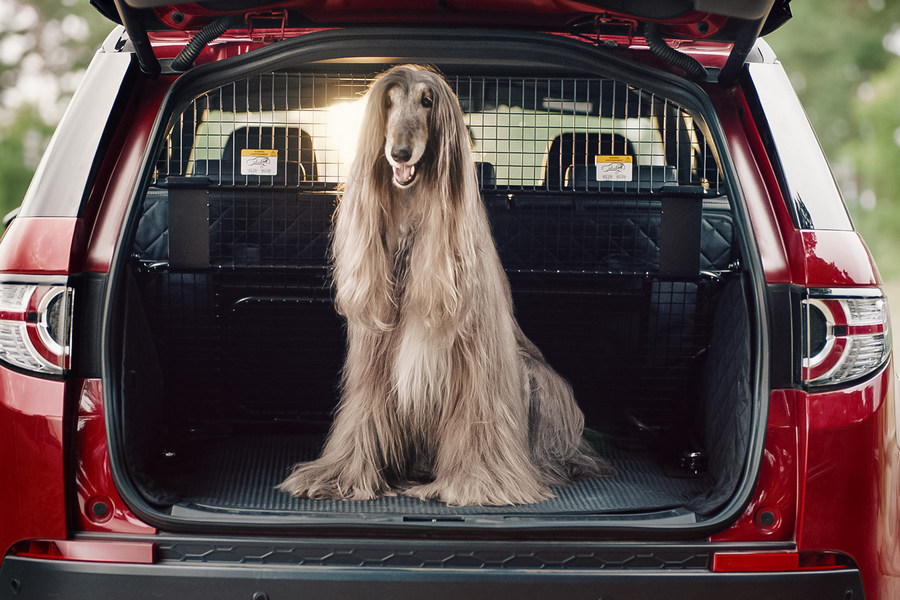 land-rover-hond-reclame-openklep
