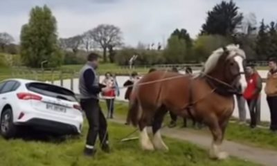 paardenkracht-paard-auto