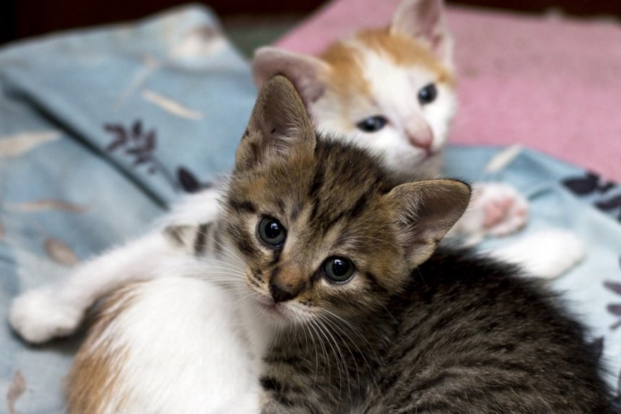 kittens-woudenberg-overleden-istock